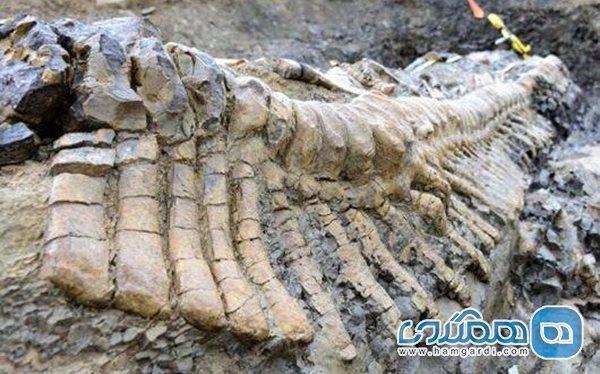 فسیل های 7 میلیون ساله لنگ 7 میلیارد اعتبار هستند