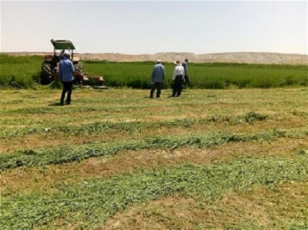 برداشت چین اول محصول یونجه درمزارع شهرستان زنجان